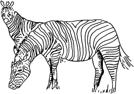 popular zebra coloring coloring desi 2967 unknown