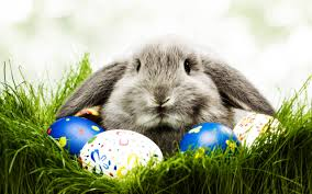 bunny easter where does the easter bunny come from bunow bloomsburg