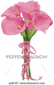 pink calla stock illustration of a bouquet of pink calla lilies jed0107
