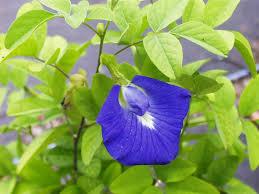 australian native plants with purple flowers australia plants a b c