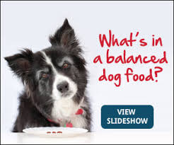 apples strawberries blueberries health snacks for dogs petmd