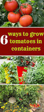 Vegetables For Container Gardening by Best 25 Growing Tomatoes Ideas On Pinterest Tomato Garden Grow