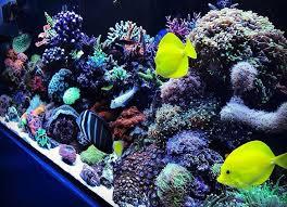 Floating Aquascape Reef2reef Saltwater And Reef Aquarium Forum - 314 best aquarium reef images on pinterest aquariums saltwater