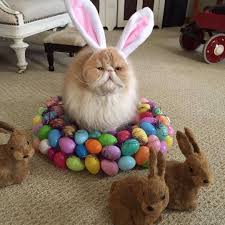 it u0027s never too early for easter aww