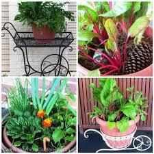 Vegetable Container Garden - fast food diy instant veggie garden part 2 the micro gardener