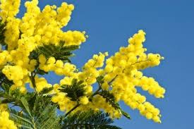 tropical trees list of flowering trees types of evergreen trees