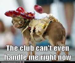 Meme Chihuahua - hispanic meme clubbing chihuahua