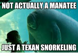Manatee Meme - not actually a manatee just a texan snorkeling quickmemecom meme