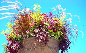 fantastic teacup planter walmart decorating ideas images in