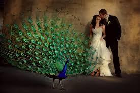peacock centerpieces great ideas for the busy peacock wedding centerpieces