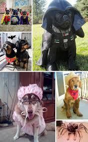 Batman Robin Dog Halloween Costumes 30 Dog Halloween Costumes 2017