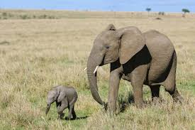 fun facts about the animal kingdom that kids will enjoy