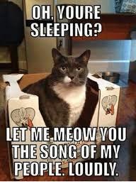 Grumpy Cat Sleep Meme - 25 best memes about grumpy cat grumpy cat memes