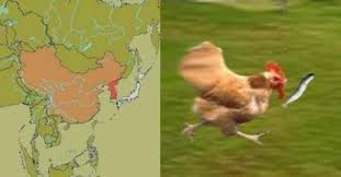Funny Chicken Memes - funny chicken memes home facebook