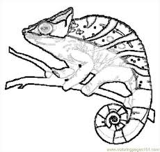Lizard Coloring Page Free Lizard Coloring Pages Reptile Coloring Pages