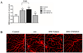 ijms free full text tnfsf15 inhibits blood retinal barrier