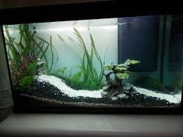 idee deco aquarium aquarium noir et blanc