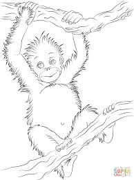 cute baby orangutan coloring page free printable coloring pages