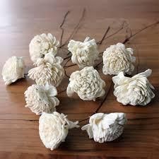 sola flowers dried flowers sola flower stemmed