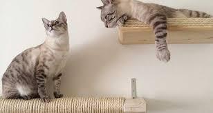 unconventional cat furniture for feline instincts catastrophic