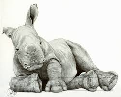 baby white rhino by bluecea on deviantart