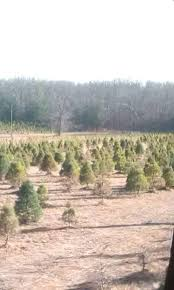 cole u0027s tree farm lebanon missouri facebook