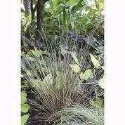 drought resistant ornamental grasses this house