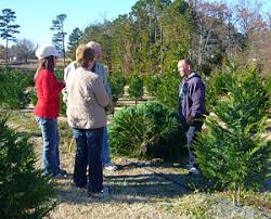 christmas tree prices reasonable prices for fresh christmas trees at motley s christmas