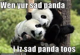Sad Panda Meme - 20 crazy adorable sad panda memes sayingimages com