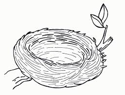 birds nest coloring pages printable coloring pages for all ages