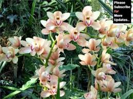 flower orchid orchid flower garden beautiful orchid flower image ideas
