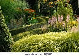 ornamental grasses in garden stock photo royalty free image