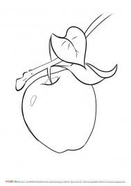 free printable coloring pages moona u201cfruits and berries u201d
