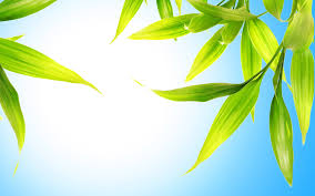leaves wallpapers custom hd 43 leaves wallpapers collection on