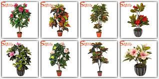 tree plants names patio garden design