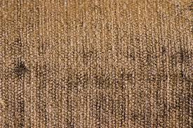 Pottery Barn Rug Shedding by Carpet Shedding U2013 Meze Blog