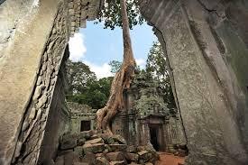 photo ta prohm ruins at angkor wat cambodia