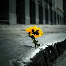 Flower And Love Quotes - 144 best flowers in cracks images on pinterest flowers