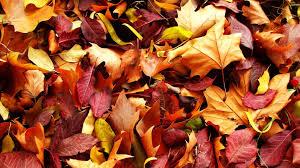 autumn pumpkin wallpaper widescreen wallpapers autumn leaves 83