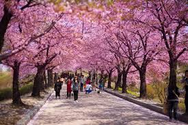 spring flower festivals korea world love flowers
