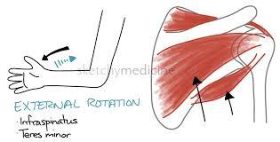 How To Palpate Subscapularis Rheumatology Sketchy Medicine