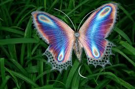 pics of butterflies wallpaper cucumberpress com