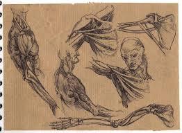 Leonardo Da Vinci Human Anatomy Drawings Leonardo Da Vinci Anatomical Studies By Thingmebob On Deviantart