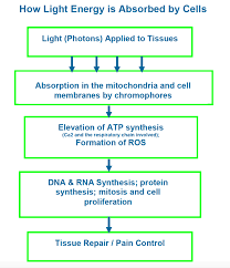 How Does Light Therapy Work Celluma Led Light Therapy Robinraygreen