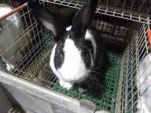 gabbie per conigli nani usate coniglio animali in vendita e in regalo a catania kijiji