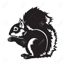 black squirrel images u0026 stock pictures royalty free black
