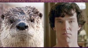 Cumberbatch Otter Meme - benedict cumberbatch resembles an otter album on imgur