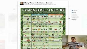 companion planting list guide youtube