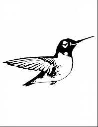 beautiful realistic flower coloring pages hummingbirds with