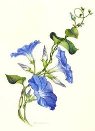 Flowers On Vines Tattoo Designs - best 25 vine drawing ideas on pinterest simple illustration